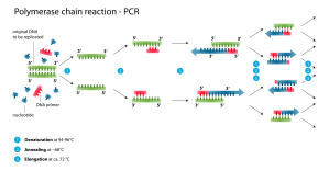 polymerase_chain_reaction-svg