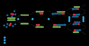 polymerase_chain_reaction-svg